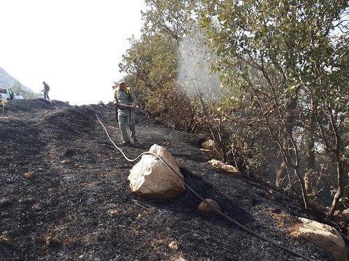 15 هکتار از جنگل های منطقه حفاظت گردیده کوسالان در آتش سوخت
