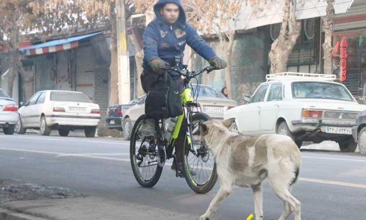 پای سگ های ولگرد به مرکز شهر باز شد