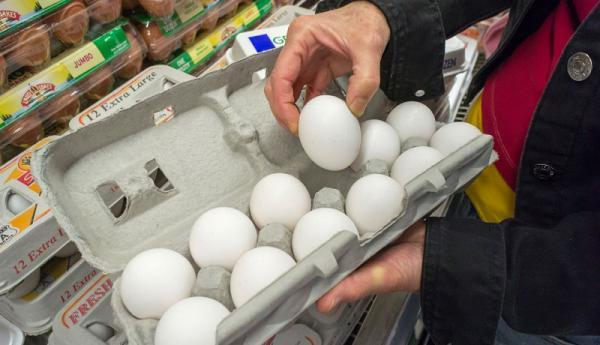 تخم مرغ در شهرهای جنوبی کمیاب شد