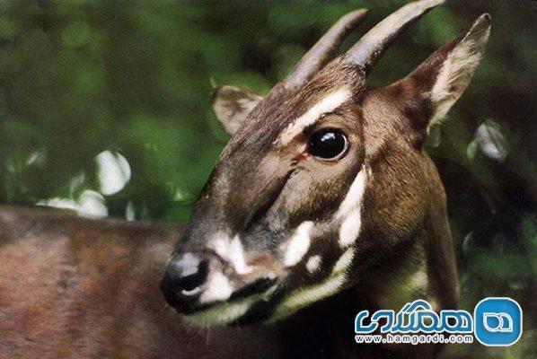 معرفی تعدادی از حیوانات در معرض خطر انقراض جهان
