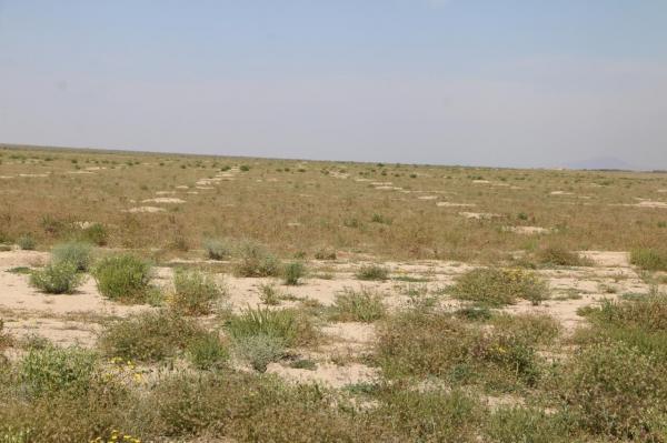 خبرنگاران 639 سند تک برگ برای اراضی ملی استان بوشهر صادر شد