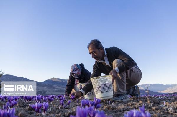 خبرنگاران 650 پروانه فعالیت کشاورزی سال 99 در میامی صادر شد